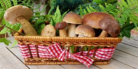 mushrooms-2678385_1280
