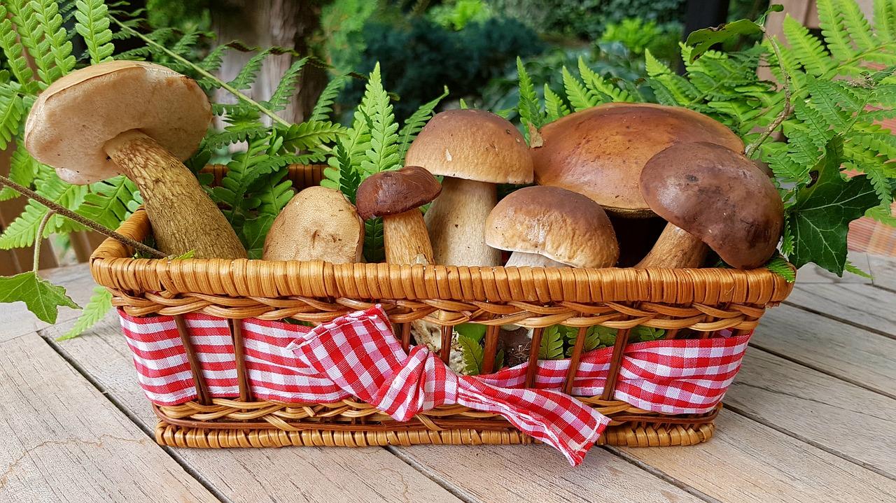 mushrooms-2678385_1280
